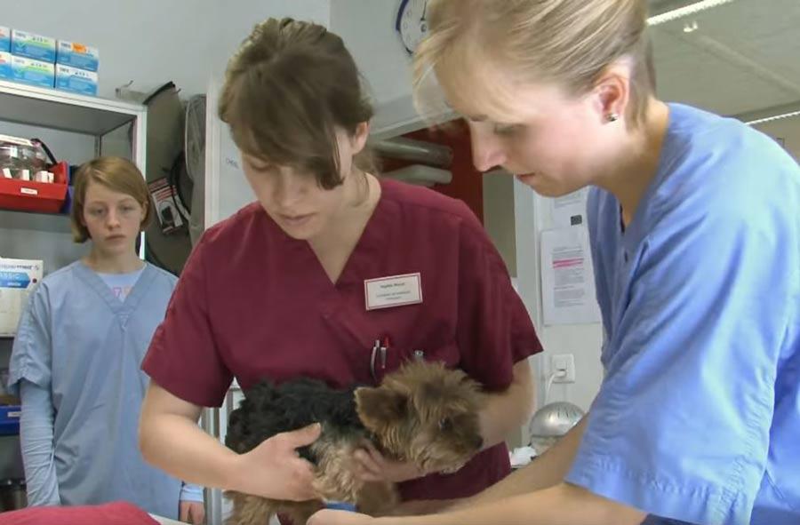 Assistant / Assistante en médecine vétérinaire CFC
