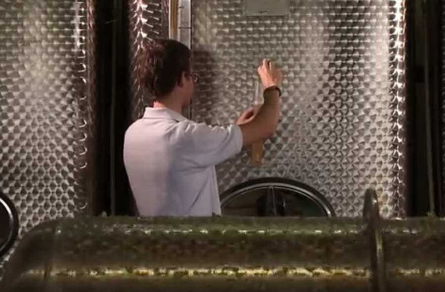 Weintechnologe/-login EFZ – Porträt eines Lernenden